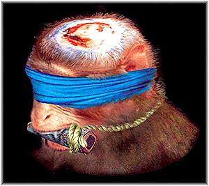 06สมองลิงแสนสนุก001