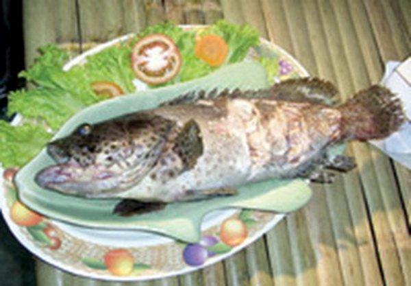 07ปลาสองแผ่นดิน001