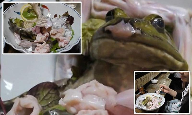 frog-sashimi