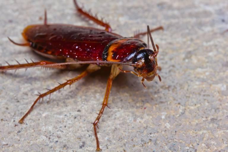 roach-delicious