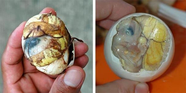 egg-containing-undeveloped-embryo