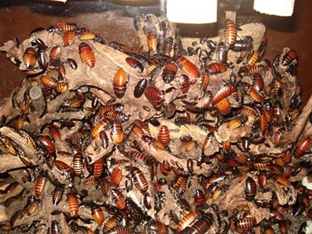 including-cockroaches