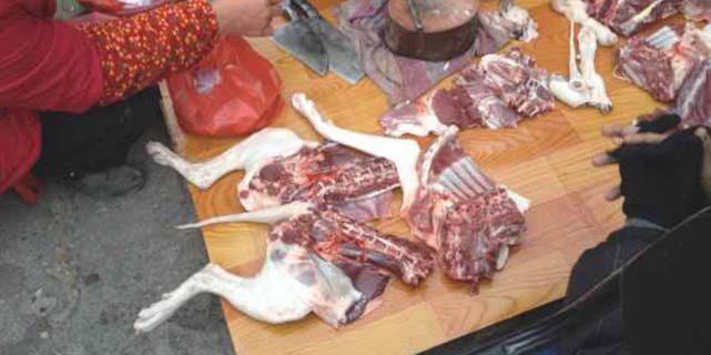 Meat strange dog meat